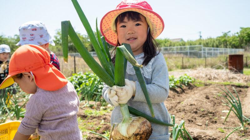 超ビックサイズの玉ねぎが大豊作!うがた苑とグローバルキッズルームうがたが合同で玉ねぎを収穫しました!